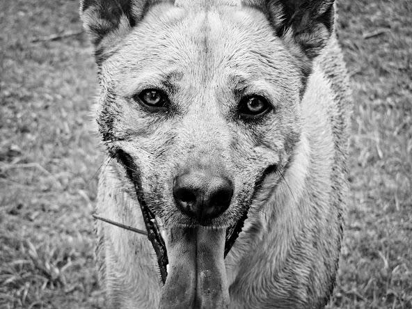 Senior Editor Nicki Porter's beloved dog Apollo
